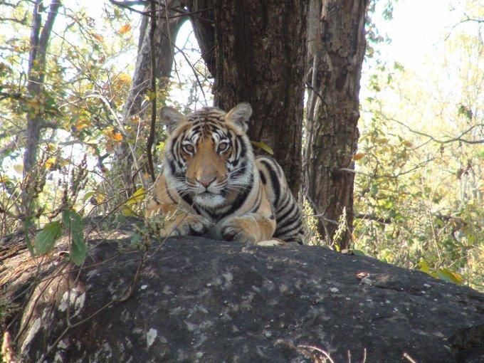 प्रधानमंत्री ने 'अंतर्राष्ट्रीय बाघ दिवस' पर वन्यजीव प्रेमियों को बधाई दी